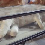 Plaster Cast Pompeii Italy - James Duvalier Blog